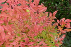 Fall Colour - Early October 2021
